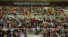 La Festa di presentazione del volley padovano, il 30 settembre 2012 al PalaFabris