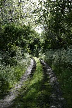 A beautiful path on a Swedish island