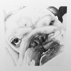 Awesome BooBoo finished xx pencil on Bristol board x