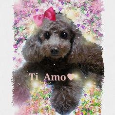 nodasanta 愛犬ティアモの絵をpick サイトでデコした作品です!女の子らしく美しくデコ飾りしました。  PetSmile