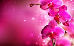 Pink Orchids Flowers Images HD Wallpapers free Download