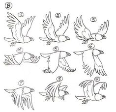 bird flight flapping animation step-by-step