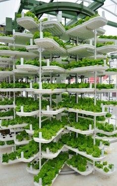 To grow one million heads of lettuce using conventional agriculture methods in the US requires either 16 acres of land in the Northern states, 8 acres of land in the Southern states, or acres in a traditional hydroponic greenhouse operation. Vancouver-b Urban Agriculture, Urban Farming, Aquaponics System, Farming System, Aquaponics Fish, Permaculture, Head Of Lettuce, Vertical Farming, Vertical Gardens