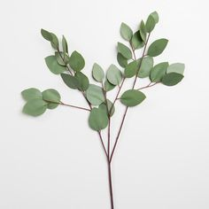 Eucalyptus is a hearty plant with beautiful green, gray leaves. Our Heart Eucalyptus Spray features these two-toned leaves that add subtle color to any faux floral arrangement.