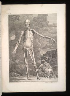 Albinus On Anatomy Pdf