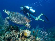 Duiken / snorkelen op vakantie, waar?