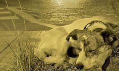 Búzios também já tem política pública de proteção aos animais