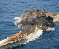 12 Terrifying Sea Monsters No One Can Explain