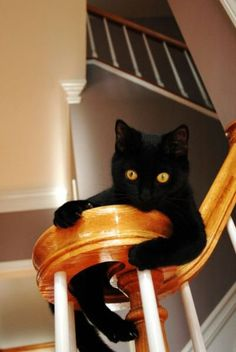 Black kitty...hanging on
