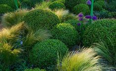 clipped box balls with Stipa Tenuissima Boxwood Garden, Garden Trees, Love Garden, Dream Garden, Landscape Design, Garden Design, Stipa, Baumgarten, Buxus