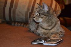 Katze mit Handy