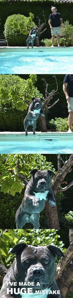 Jump in the pool they said...so funny