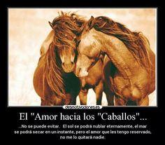 214 Mejores Imagenes De Mi Pasion Los Caballos My Passion