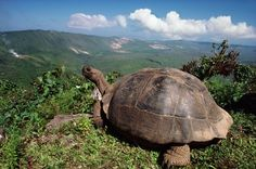 The enchanting Galapagos Islands casts their spell: A wildlife ...