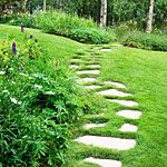 """Need to do this on the south lawn where the """"dog path"""" is."""