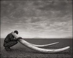 Naturfotografie: Afrikas wilde Tiere –tot oder lebendig | Wissen | ZEIT ONLINE