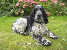French conversation practice ideas: Introduction and character description in French - Je m'appelle Billy! His In Spanish, Spanish English, French Teacher, Teaching French, Communication Orale, French Conversation, Plan My Trip, Core French, French Classroom