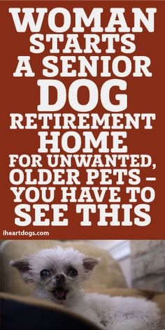 Woman Starts A Senior Dog Retirement Home For Unwanted Older Pets... You HAVE To See This! <3