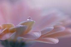 drop by Jarmila Vymazalová on 500px