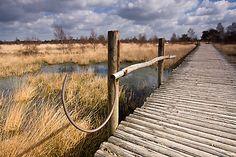 """Dangerous"" landscape, but so beautiful... National Park De Groote Peel in The Netherlands."