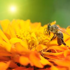 Pesticide Testing in Honey Bee Deaths