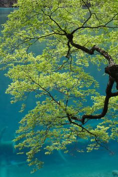 Tree in front of the Lake Shuanglonghai by George Lu Jiuzhaigou Valley, Sichuan, China Nature Tree, Tree Forest, Belle Photo, Beautiful World, Beautiful Boys, Mother Nature, Art Photography, Flower Photography, Scenery
