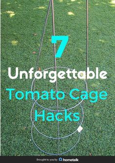 7 ways to think outside the box! DIY tomato cage hacks that will leave you in awe.