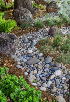 110 Awesome Dry River Bed Landscaping Design Ideas You Have Owned On Your Garden Dry Riverbed Landscaping, River Rock Landscaping, Landscaping With Rocks, Landscaping Plants, Front Yard Landscaping, Landscaping Design, Inexpensive Landscaping, Florida Landscaping, Country Landscaping