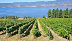 Central Okanagan Wineries Credit Warm Weather for More Visitors