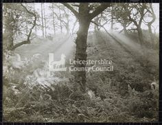 LS1233 - Misty sunrise at Bardon Hill, Leics