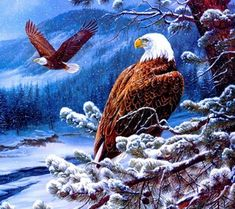 Unframed Eagle Animals DIY Painting By Numbers Kits Drawing Painting Picture On Canvas For Home Decoration Unique Wall Artwork Cross Paintings, Animal Paintings, Eagle Animals, Eagle Pictures, Jesus Pictures, Santa Cross Stitch, Eagle Art, Snow Sculptures, Pattern Pictures
