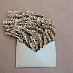 Kiev-based photographer Anna Remarchuk has created these poetic compositions tucking flowers inside of envelopes from her great-grandfather. Wheat.