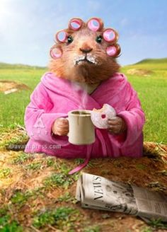 another day, another donut Seriously Funny Cards Funny Animals, Cute Animals, Groundhog Day, Seriously Funny, I Love Coffee, Funny Cards, Good Morning Quotes, Good Morning Funny Pictures, Morning Humor