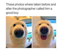 These funny videos of funny dogs will make you laugh. Hope you enjoy these funny dog videos. This funny dogs compilation doesn't include funny dog vines. Funny Animal Jokes, Funny Animal Pictures, Cute Funny Animals, Animal Memes, Funny Cute, Funny Memes, Hilarious, Dog Pictures, So Cute