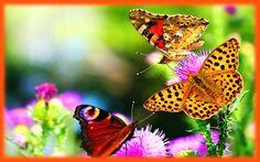 Gambar Kupu-Kupu dan Bunga