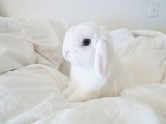 Bunny is as pretty as a picture.