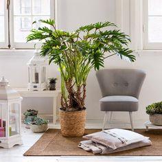 Green plants, indoor plants и plants. Indoor Plant Wall, Indoor Garden, Indoor Plants, Cozy Nook, Plant Design, Green Plants, Pots, Houseplants, Home And Living