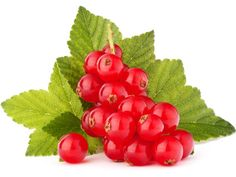 Punchy top note of tart red currant blended with green and floral notes. Black Spots On Skin, Skin Spots, Nutrition, Fragrance Oil, Aloe Vera, How To Remove, Floral, Red, Blog