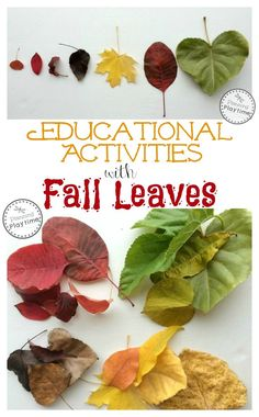 Fun Educational Activities with Fall Leaves - Color Sorting, Size Sorting, Shape Sorting, and fall leaf art. Enjoy nature and learn with fall leaves. Fall Activities For Toddlers, Forest School Activities, Kids Learning Activities, Science For Kids, Educational Activities, Teaching Ideas, Teaching Resources, Leaf Crafts, Fall Crafts