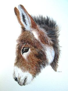 ORIGINAL watercolour painting of a donkey by Wildinsight Animal Paintings, Animal Drawings, Art Drawings, Watercolor Animals, Watercolor Paintings, Donkey Images, Donkey Drawing, Color Pencil Art, Horse Art
