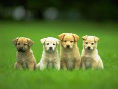 Google Image Result for http://2.bp.blogspot.com/_brq_6tJ57kk/StDjW3UkThI/AAAAAAAAAMI/LZZx4-Y6knU/S760/4-cute-puppies.jpg