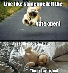 I'm pretty sure this is Cooper's exact thought process every single day.