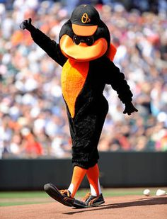 Oriole Bird -- Fun fact, His favorite foods are bird seed and the Maryland Crab Cake. We're back baaaaaaaaby! Baseball Mascots, Team Mascots, Baseball Mom, Baltimore Orioles Baseball, Baltimore Ravens, Natty Boh, Oriole Bird, Chris Davis, Baseball Wreaths