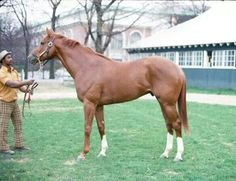Secretariat as a 2 years old.  The most magnificent chestnut stallion. His only conformation fault, slight goose rump (lower tail set).  99% perfection