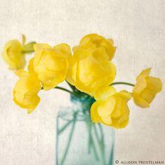 yellow flower art- Nature Mandalas