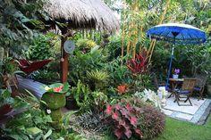 Tropical garden by Dennis Hundscheidt. Stunning garden on a acre block. Bali Garden, Balinese Garden, Florida Landscaping, Tropical Landscaping, Florida Gardening, Landscaping Ideas, Colorful Plants, Tropical Plants, Tropical Gardens