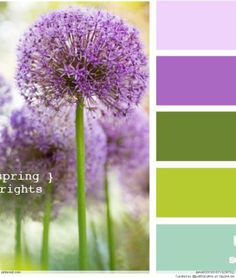 Design Seeds, for all who love color. Apple Yarns uses Design Seeds for color inspiration for knitting and crochet projects. Summer Wedding Colors, Spring Wedding Flowers, Summer Colors, Green Wedding, Summer Flowers, Design Seeds, Spring Color Palette, Green Colour Palette, Colour Schemes