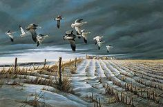 Terry Redlin - Winter Snows - This is one of more than works of art offered by ArtUSA, The World's Source for Collectible Art. Toll-free or Wildlife Paintings, Wildlife Art, Animal Paintings, Romantic Paintings, Beautiful Paintings, Terry Redlin, Duck Art, Snow Goose, Outdoor Paint