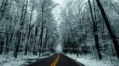 Winter Snowy Woods Road Photography