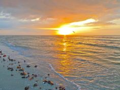 Sanibel Island, FL.  Just gorgeous! Florida Travel, Florida Beaches, Travel Usa, Beautiful Sunset, Beautiful Beaches, Goin Coastal, Captiva Island, Hot And Humid, Amazing Destinations